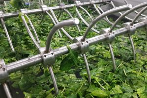 Spinach processing machines, Spinach washer, Washer for spinach, Food processing equipment, Washer for food industry, Washer for vegetable, pračka špenátová, Vegetable washer