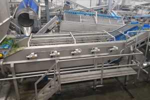 Spinach processing machines, Spinach washer, Washer for spinach, Food processing equipment, Washer for food industry, Washer for vegetable
