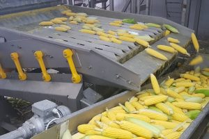 sweet corn processing machines, Corn husker for corn husking, removing of leaves, Husking, peeling of product, sweet corn processing, husking machine, sweet corn husker machine