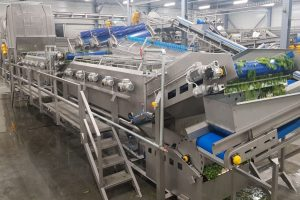 Spinach processing machines, Line for spinach, Spinach processing, Food processing equipment