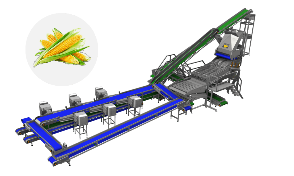 Line for sweet corn, Sweet corn processing, Food processing equipment